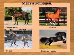 Масти лошадей. Гнедая масть Рыжая Серая Вороная масть