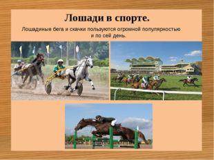 Лошади в спорте. Лошадиные бега и скачки пользуются огромной популярностью и