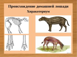 Хиракотериум Происхождение домашней лошади