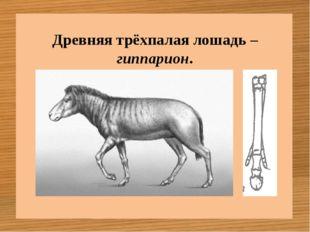 Древняя трёхпалая лошадь – гиппарион.