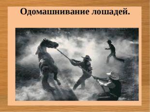 Одомашнивание лошадей.