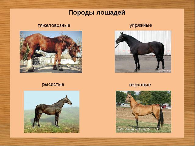 Породы лошадей тяжеловозные упряжные рысистые верховые