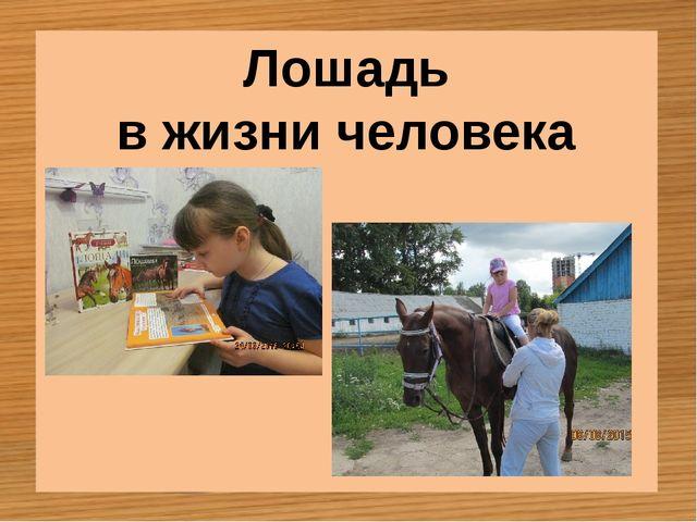 Лошадь в жизни человека