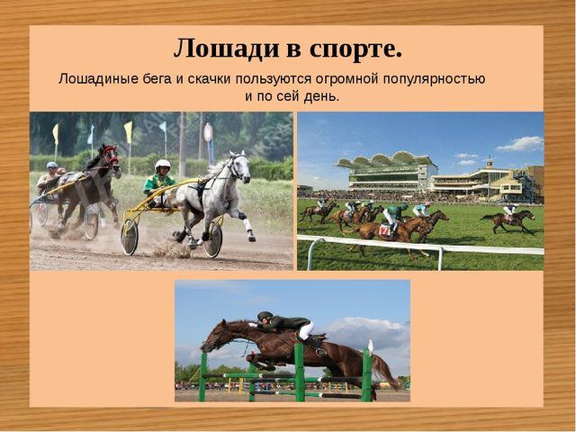 Лошади в спорте. Лошадиные бега и скачки пользуются огромной популярностью и...
