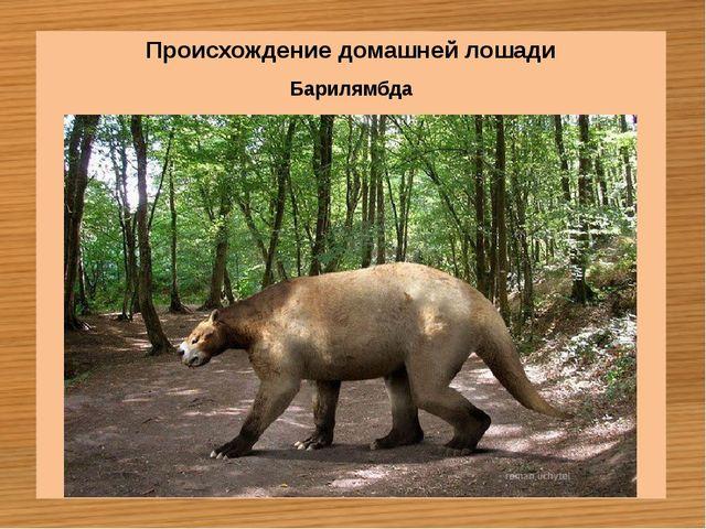 Барилямбда Происхождение домашней лошади