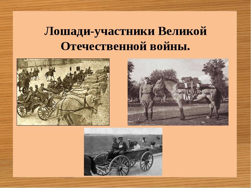 Лошади-участники Великой Отечественной войны.