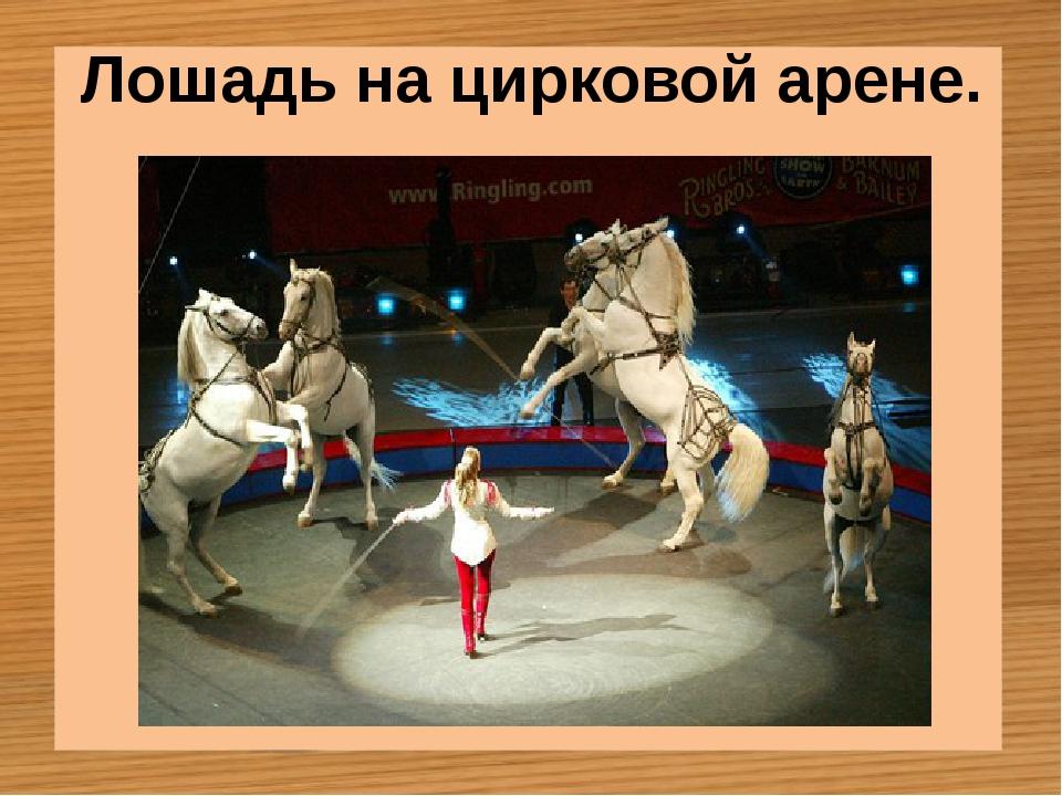 Лошадь на цирковой арене.