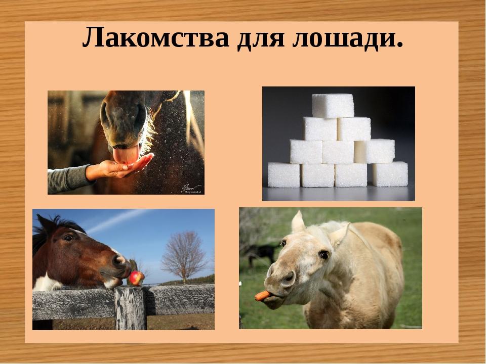 Лакомства для лошади.