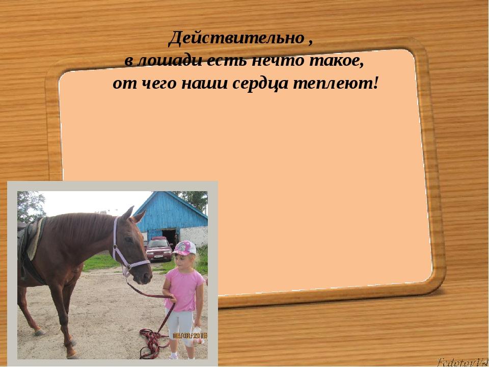 Действительно , в лошади есть нечто такое, от чего наши сердца теплеют!