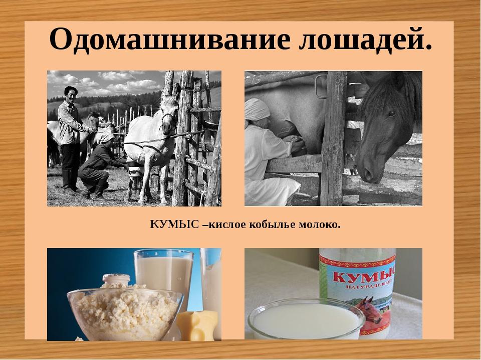 Одомашнивание лошадей. КУМЫС –кислое кобылье молоко.