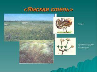 «Ямская степь» дрофа Проломник Козо-Полянского
