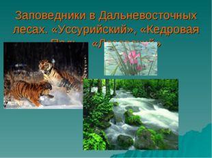 Заповедники в Дальневосточных лесах. «Уссурийский», «Кедровая Падь», «Лазовск