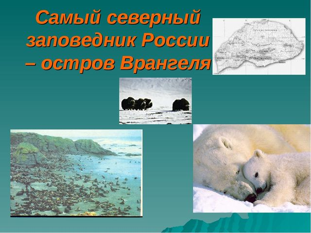 Самый северный заповедник России – остров Врангеля