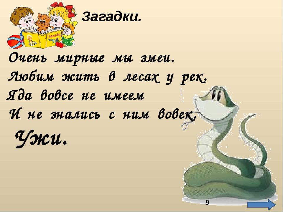 Ужи. Загадки. Очень мирные мы змеи. Любим жить в лесах у рек. Яда вовсе не им...