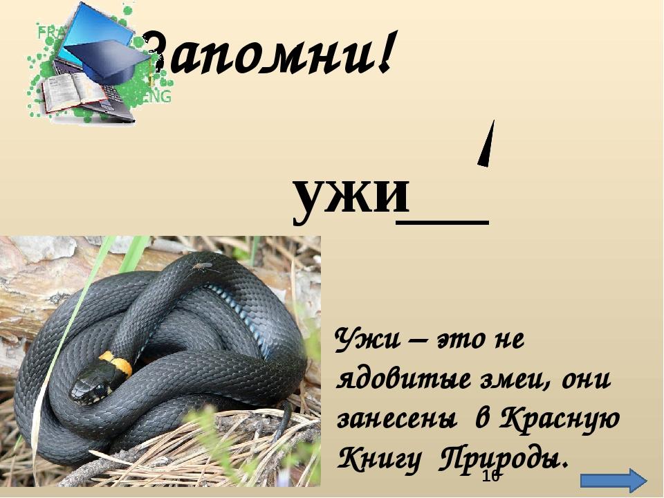 Ужи – это не ядовитые змеи, они занесены в Красную Книгу Природы. Запомни! ужи