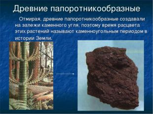 Древние папоротникообразные Отмирая, древние папоротникообразные создавали на