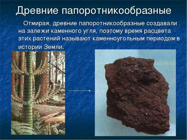 Древние папоротникообразные Отмирая, древние папоротникообразные создавали на...