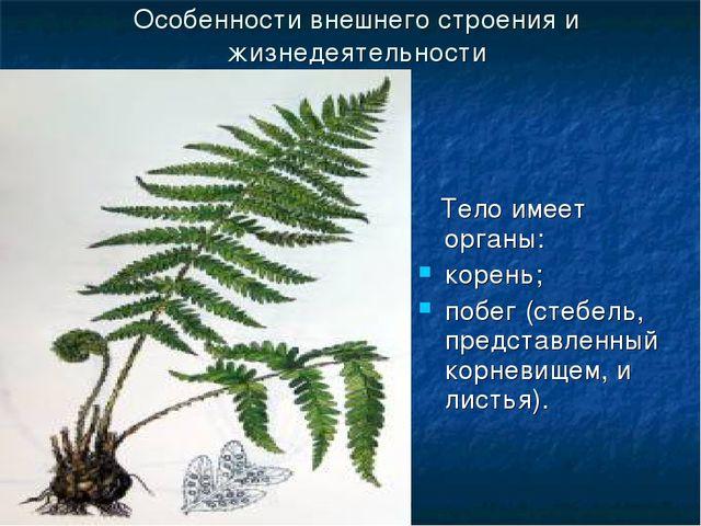ГБОУ СОШ №1020 Особенности внешнего строения и жизнедеятельности Тело имеет о...