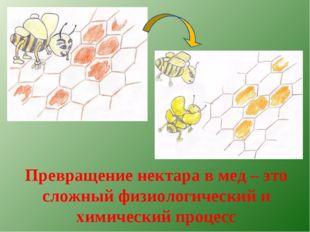 Превращение нектара в мед – это сложный физиологический и химический процесс