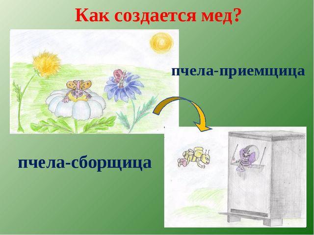 Как создается мед? пчела-сборщица пчела-приемщица