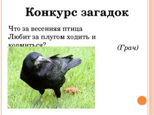 Конкурс загадок Что за весенняя птица Любит за плугом ходить и кормиться? (Гр