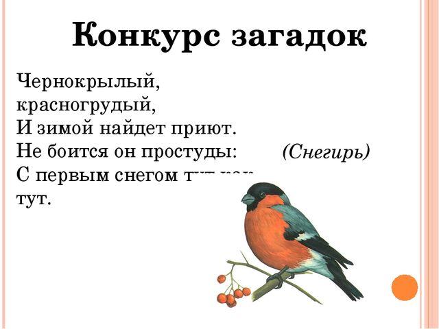 Конкурс загадок Чернокрылый, красногрудый, И зимой найдет приют. Не боится он...