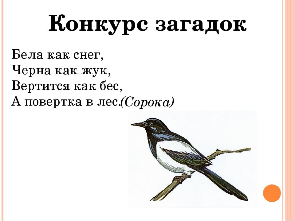 Конкурс загадок Бела как снег, Черна как жук, Вертится как бес, А повертка в...