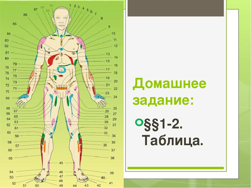 Домашнее задание: §§1-2. Таблица.