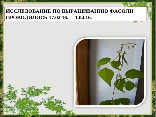 ИССЛЕДОВАНИЕ ПО ВЫРАЩИВАНИЮ ФАСОЛИ ПРОВОДИЛОСЬ 17.02.16. - 1.04.16.