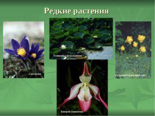 Редкие растения Сон-трава Венерин башмачок Купальница европейская Кувшинка бе