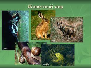 Животный мир Дятел Заяц Волк Лягушка Улитка