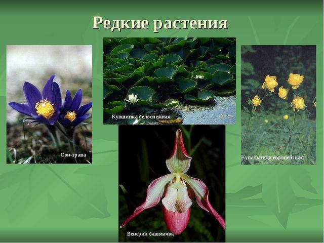Редкие растения Сон-трава Венерин башмачок Купальница европейская Кувшинка бе...