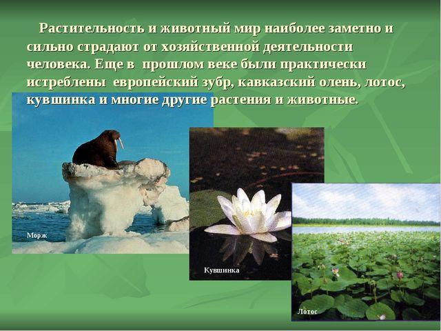 Растительность и животный мир наиболее заметно и сильно страдают от хозяйств...