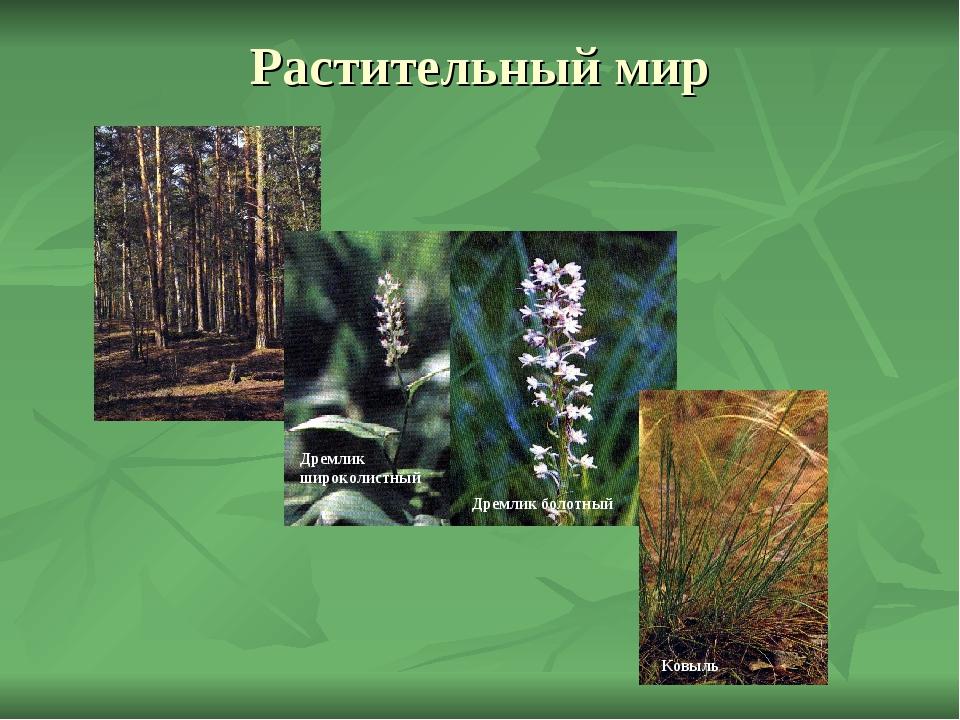 Растительный мир Дремлик широколистный Дремлик болотный Ковыль