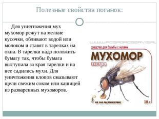 Полезные свойства поганок: Для уничтожения мух мухомор режут на мелкие кусочк