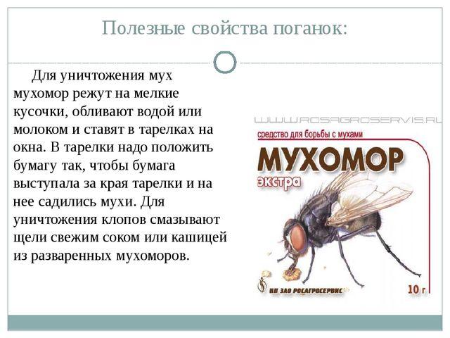 Полезные свойства поганок: Для уничтожения мух мухомор режут на мелкие кусочк...