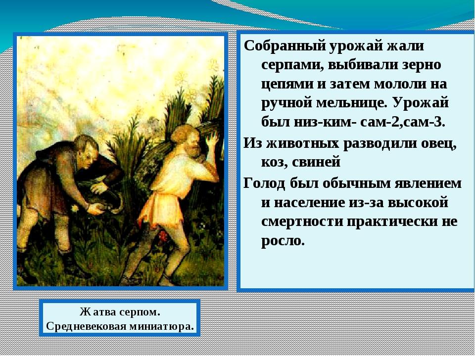Собранный урожай жали серпами, выбивали зерно цепями и затем мололи на ручной...