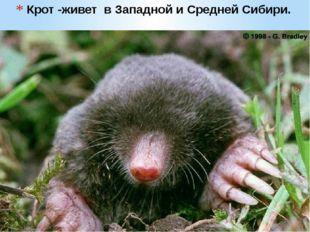 Крот -живет в Западной и Средней Сибири.