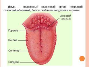 Органические вещества входящие в состав слюны 1. Муцины – сложные белки, сод