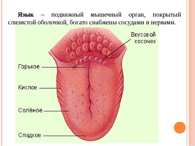 Органические вещества входящие в состав слюны 1. Муцины – сложные белки, сод...