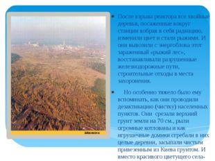 После взрыва реактора все хвойные деревья, посаженные вокруг станции вобрав