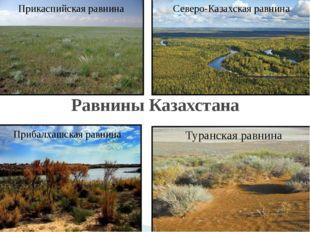 Равнины Казахстана Прибалхашская равнина Северо-Казахская равнина Прикаспийск