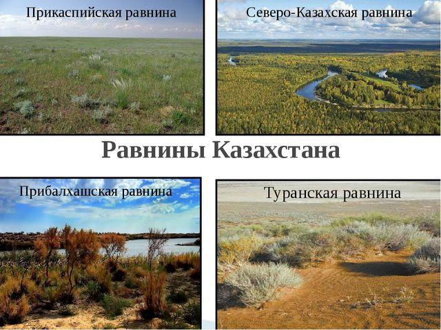 Равнины Казахстана Прибалхашская равнина Северо-Казахская равнина Прикаспийск...