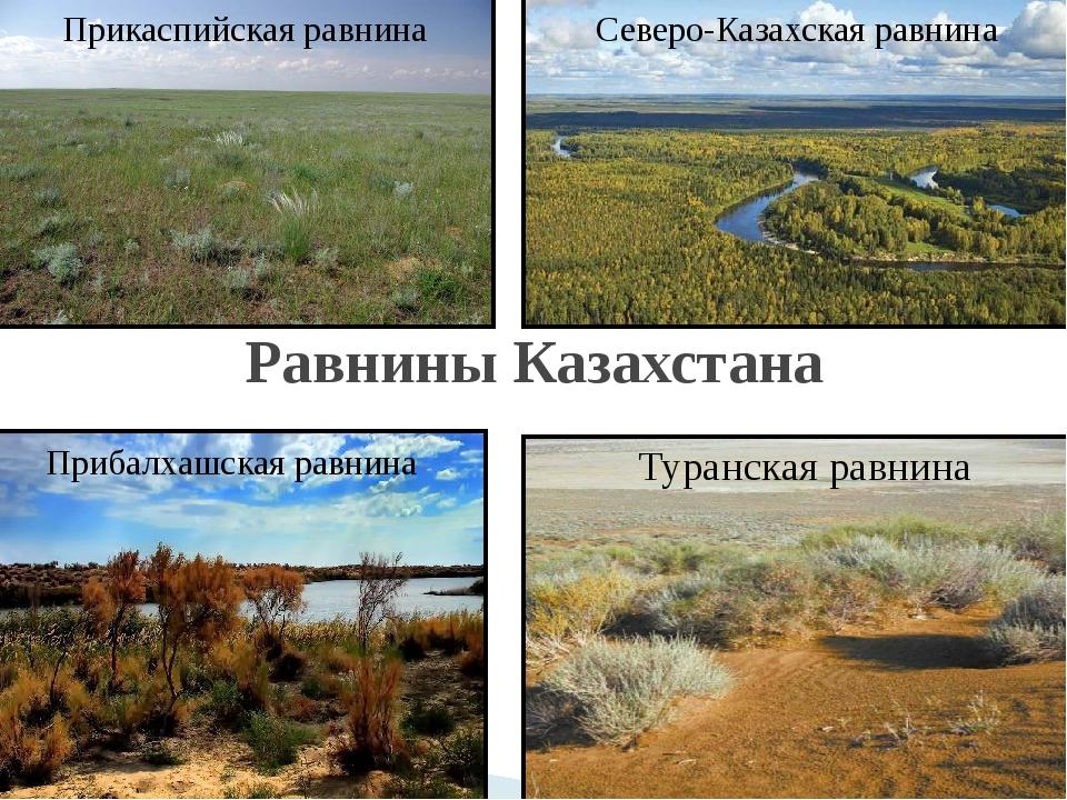 Реферат на тему северо казахская равнина 2680