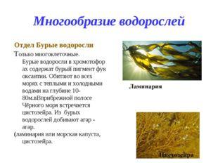 Многообразие водорослей Отдел Бурые водоросли Только многоклеточные. Бурыево