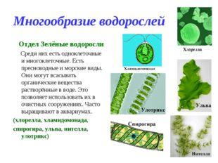 Многообразие водорослей Отдел Зелёные водоросли Среди них есть одноклеточные