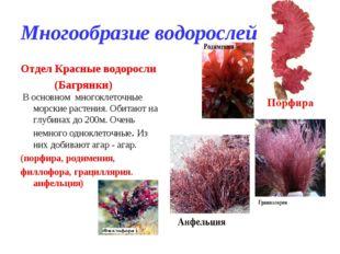 Многообразие водорослей Отдел Красные водоросли (Багрянки) В основном многокл