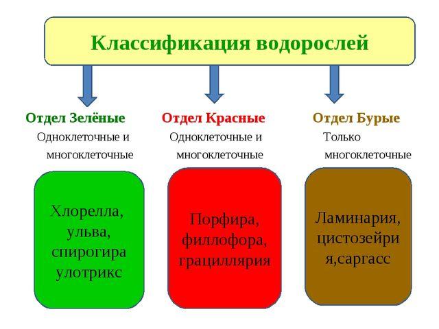 Отдел Зелёные Отдел Красные Отдел Бурые Одноклеточные и Одноклеточные и Толь...