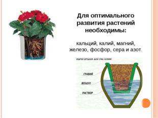 Для оптимального развития растений необходимы: кальций, калий, магний, железо