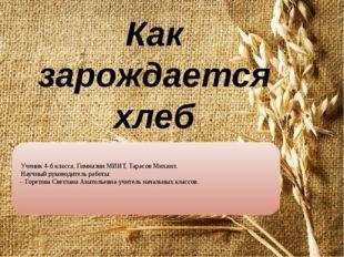 Как зарождается хлеб Ученик 4-б класса, Гимназии МИИТ, Тарасов Михаил. Научны